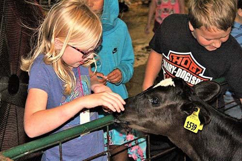 Hollister Elementary students visit dairy at C of O