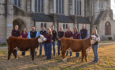 College of the Ozarks annual beef production sale