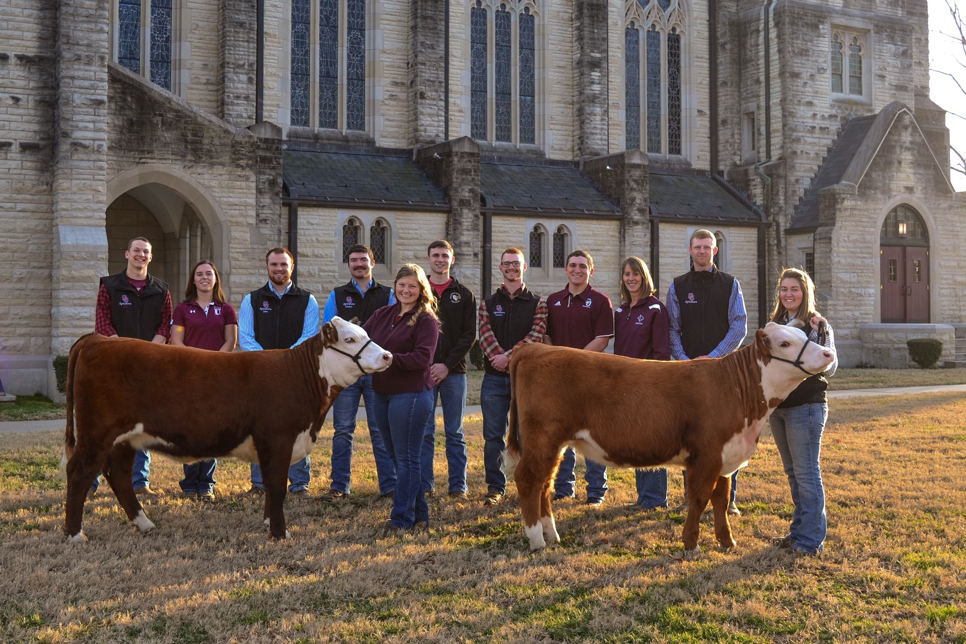 College of the Ozarks annual Hereford sale